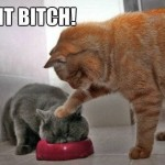 funny-asshole-cat-push-face-bowl-eat-it-bitch-pics