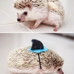 funny-hedgehog-shark-costume