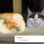 funny-cat-staring-sandwich-table